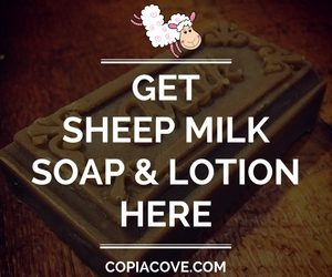 Copia Cove Icelandic Sheep | Get Sheep Milk Soap & Lotion | Shepherd Like A Girl