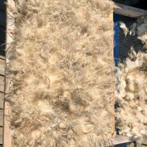 DIY Sheep Crafts | How to Make a Felted Fleece Rug | Shepherd Like A Girl