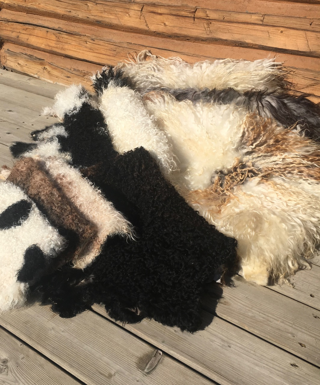I never intended to tan sheep pelts into beautiful sheepskins in my bathtub… I started off like most sheep owners. After sending my lambs to the butcher to ...