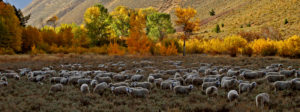 trailing of the sheep 23rd ANNUAL FESTIVAL & CELEBRATION October 9 - 13, 2019 Idaho
